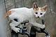 фотоЛов на котки в северна Гърция