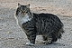 Коледни котки от Пловдив