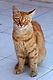 Котките на Турция